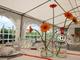 Looking for a marquee?