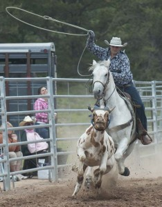 A cowboy chases down a steer in a roping competition of the Great Lakes Rodeo. (photo by Ron Caspi)