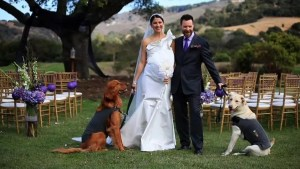 Wedding couple with 2 doggies 960 by 540