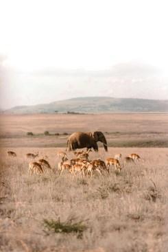 Amazing wildlife at Nambiti Plains