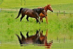 When we mirror our partners responses we will feel really attuned and in stride with each other like these beautiful horses