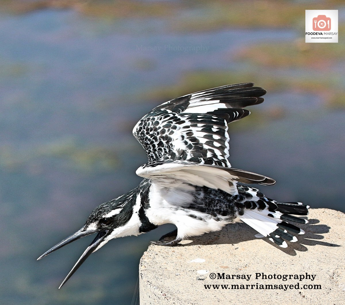 pied-kingfisher-wings-with-watermark-with-foodeva-sign.jpg?fit=1200%2C1061&ssl=1