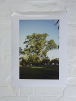 Anne Kay, A figure shows the scale. Running to catch a tree. 1997 to 2014, A2 inkjet print on photo paper