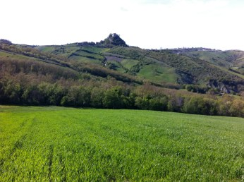 fields with castles