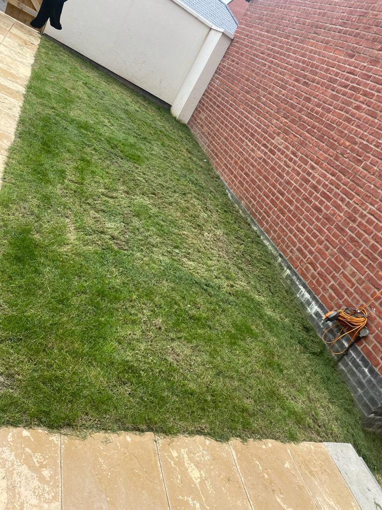 Basic Lawn
