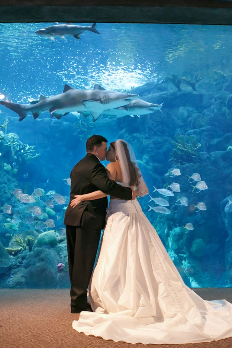 Iconic Tampa Wedding Locations Top Tampa Wedding Places