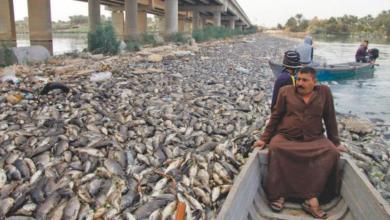 Photo of ايران تقتل اسماك العراق… نفوق مئات الآلاف من الأسماك في نهر الفرات