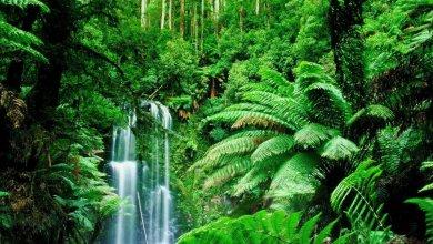 Photo of الغابات ملائكة تحرس البشرية من خطر التلوث