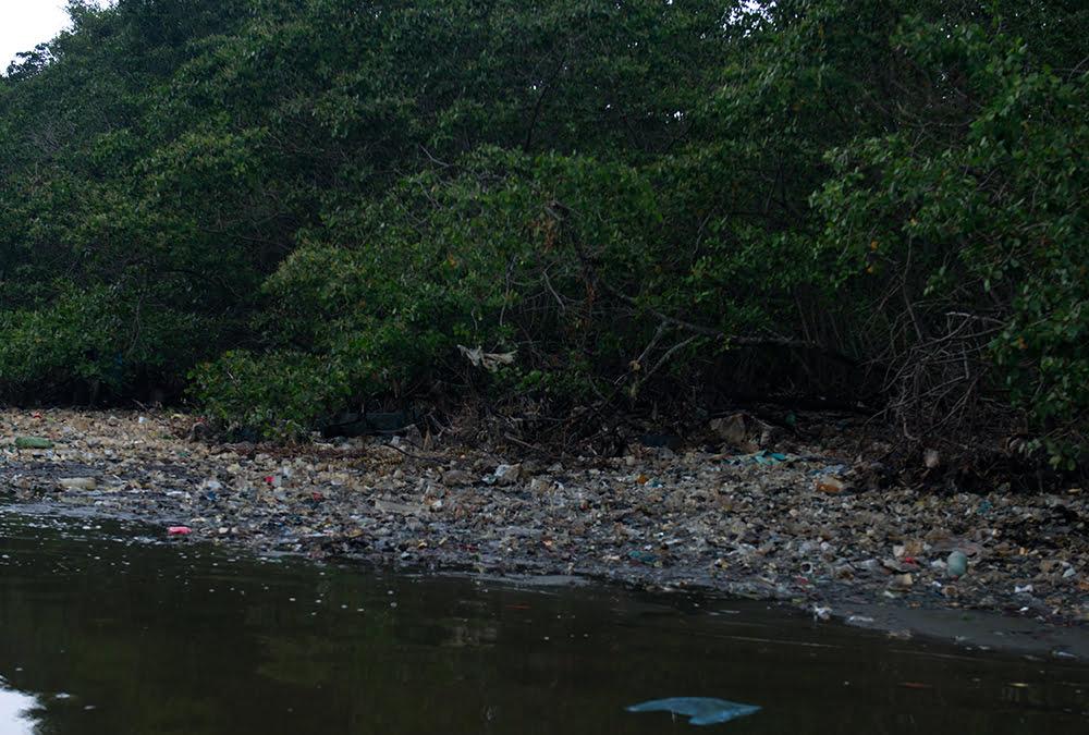 Colapso dos rios brasileiros, imagem de manguezal poluído