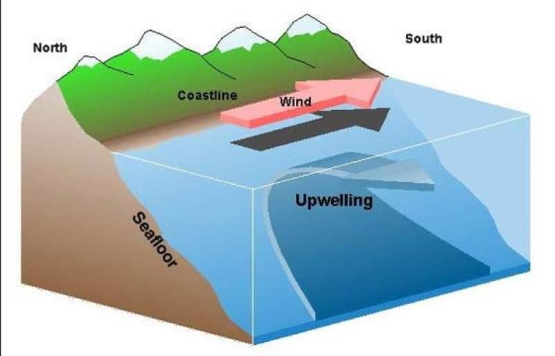 ilustração mostrando como acontece a ressrugência no mar.