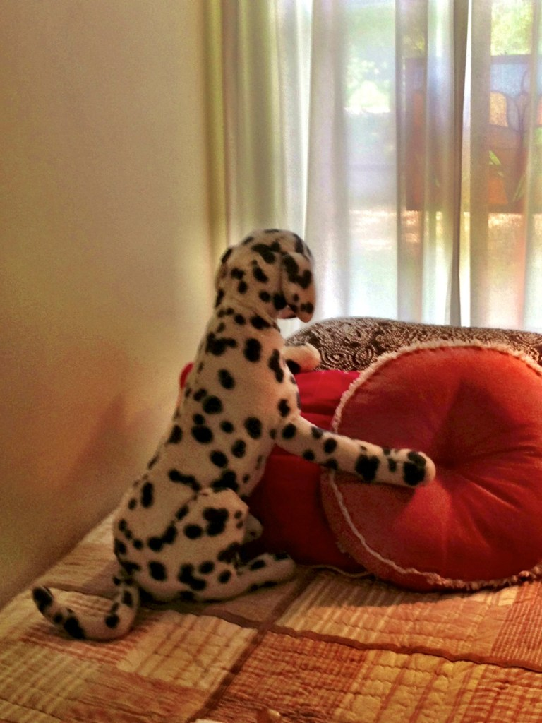 stuffed dog, dalmation