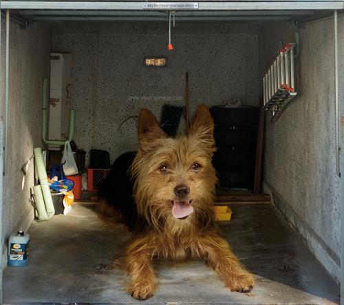 garage, dog