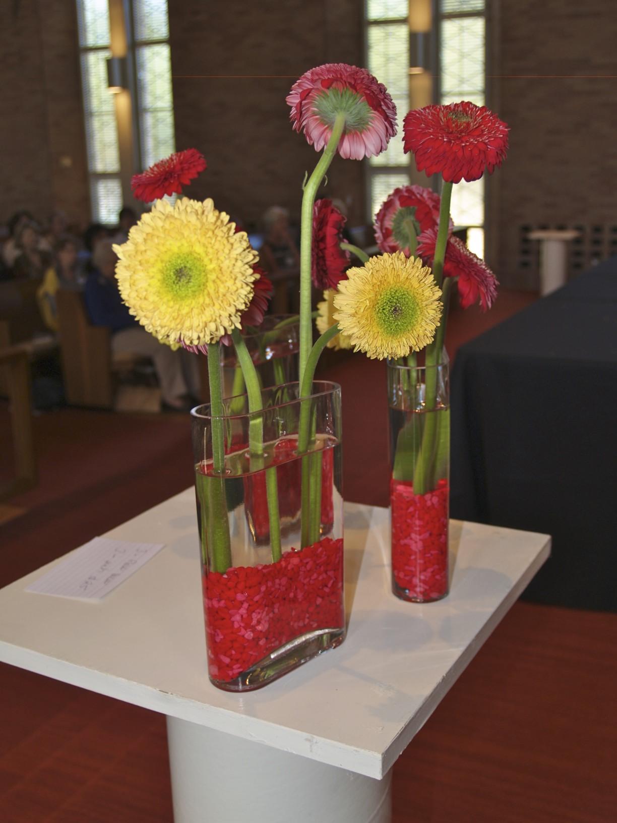 gerrondo daisies