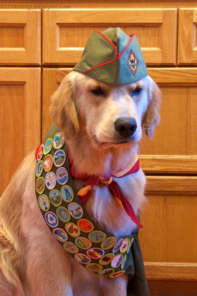 dog in a scout uniform