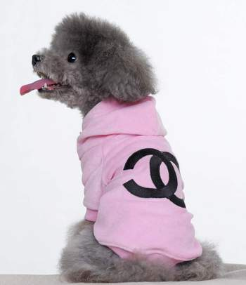 dog in chanel