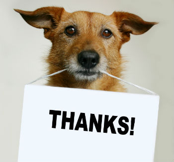 dog with thank you sign