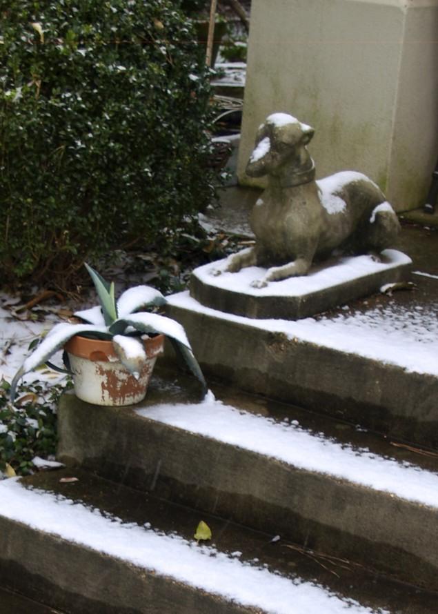 snow on dog statue