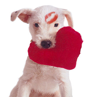dog with toy heart