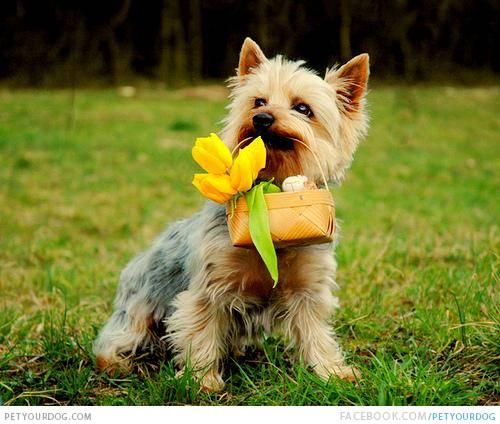 dog with flower basket