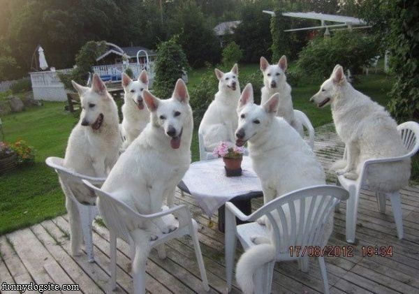 dog dinner party