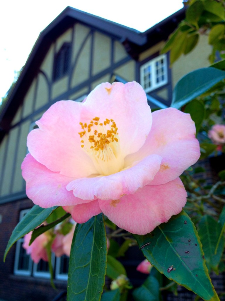 The Eudora Welty Garden Celebration Countdown