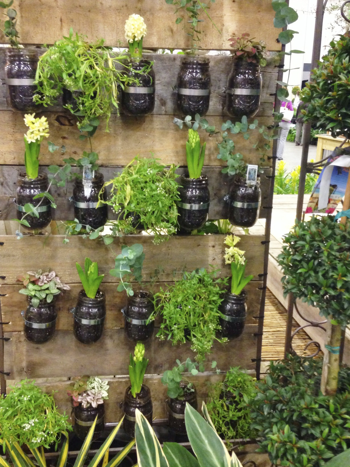 plants in mason jar display