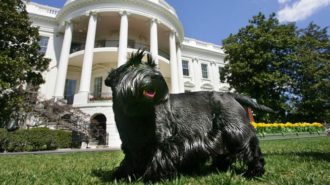 Barney the Bushes dog