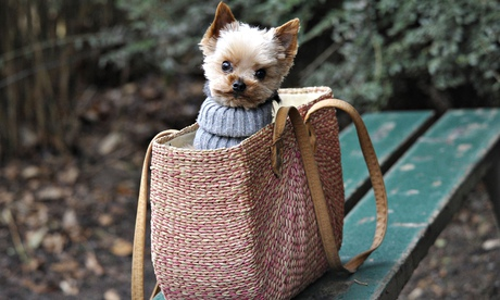 dog in shopping bag