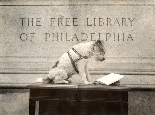 dog at library