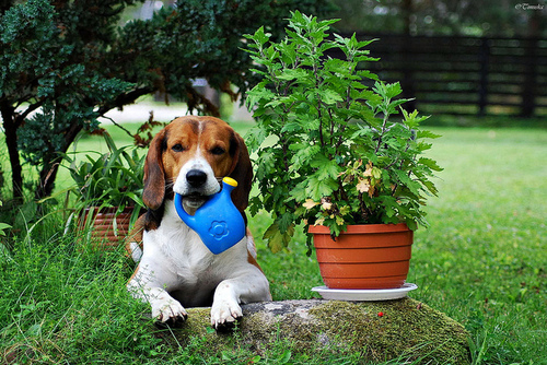 dog with watering can
