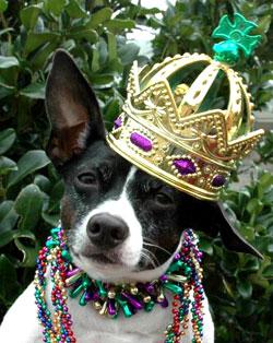 dog in mardi gras crown