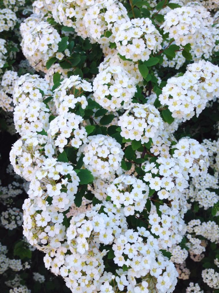 Portland Maine flowers