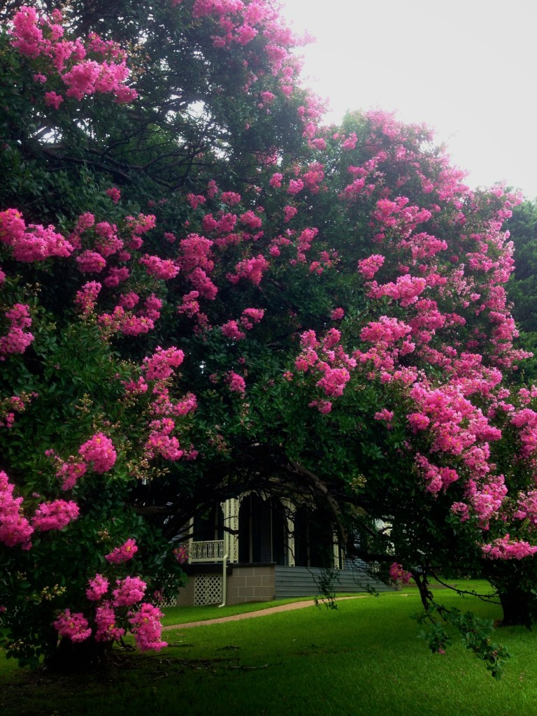 Manship House and Crepe Myrtles