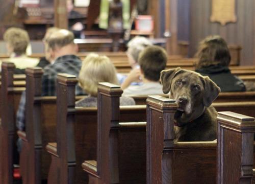 church dog
