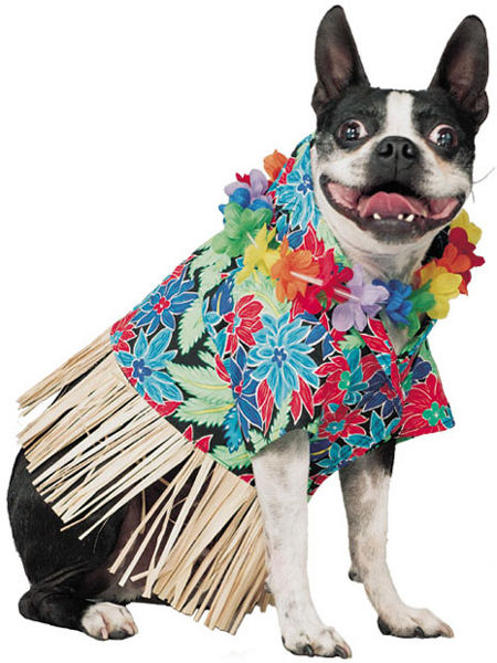 hawaii dog
