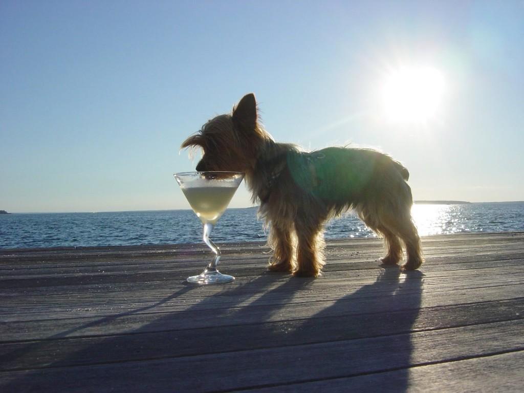 drinking-dog-1024x768