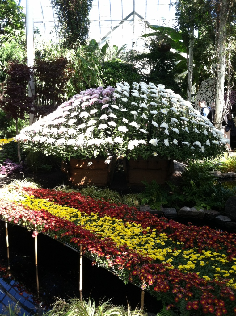 chrysanthemum show 28
