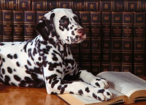 dog-reading61
