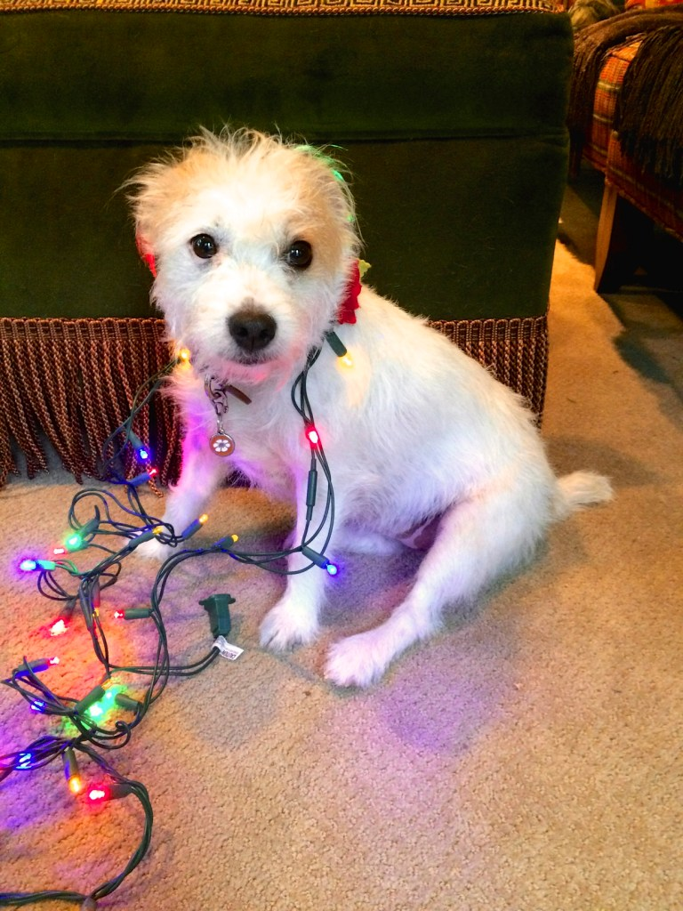 Cammie in Christmas Lights