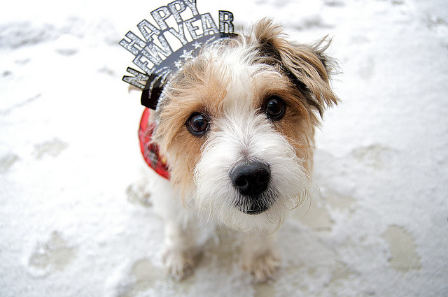 new years dog1