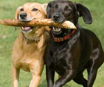 best friend dogs