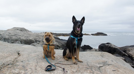 dogs in newport