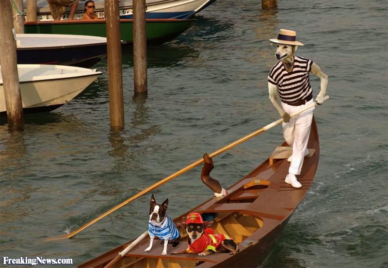 Dog-Steering-a-Gondola-in-Venice--94455
