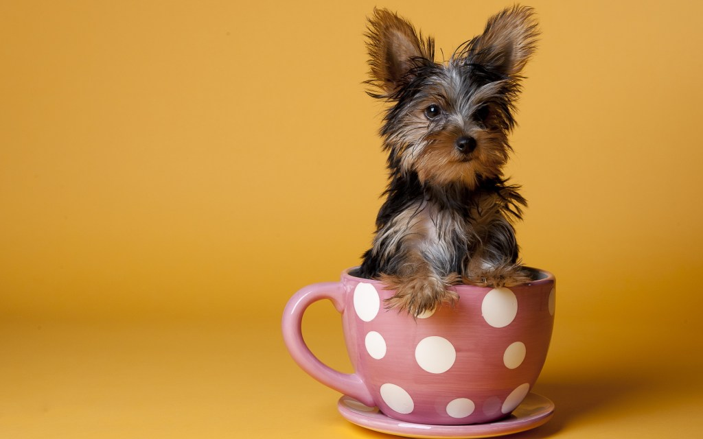 puppy-coffee-12