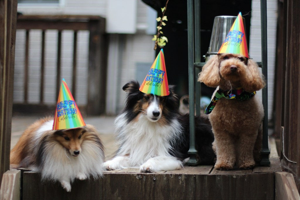 dogs party hats