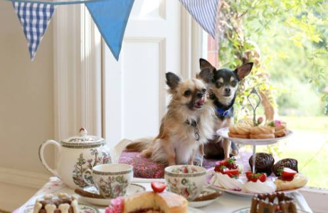 dogs tea party