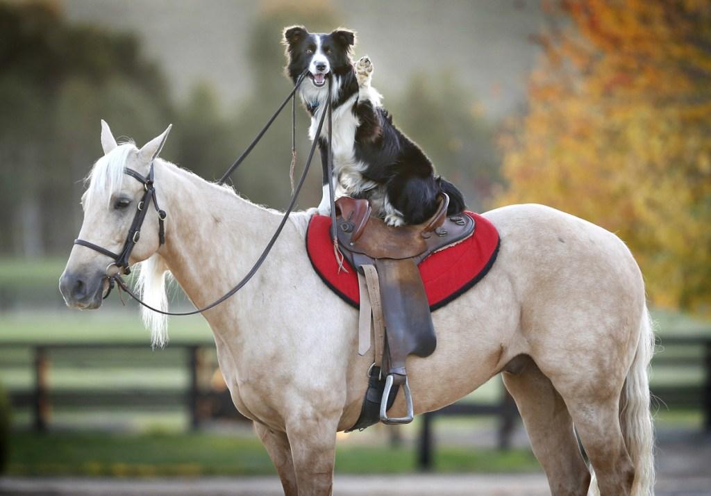 dog in saddle