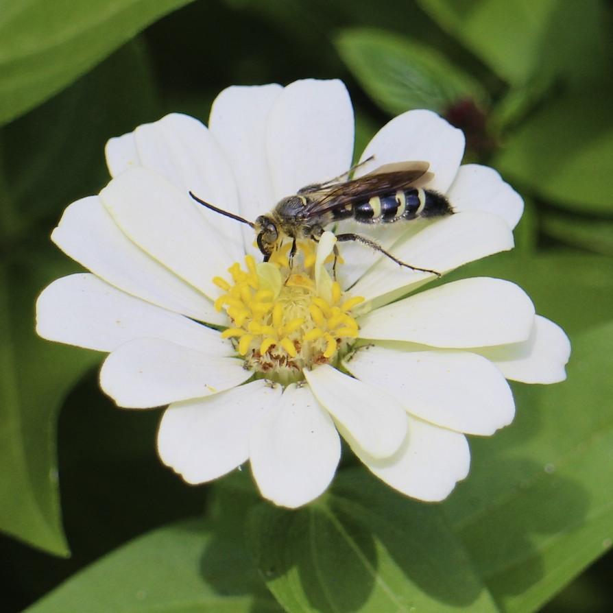 Pollinators in the gardenPollinators in the garden