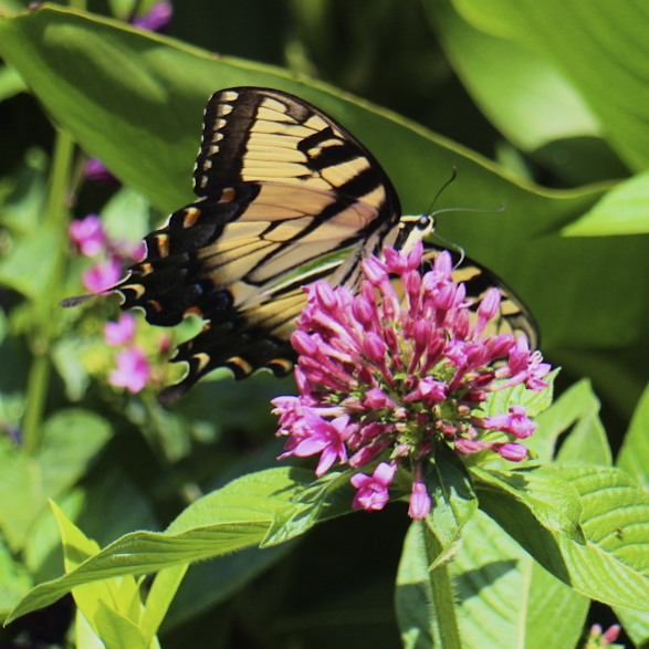 Pollinators in the garden