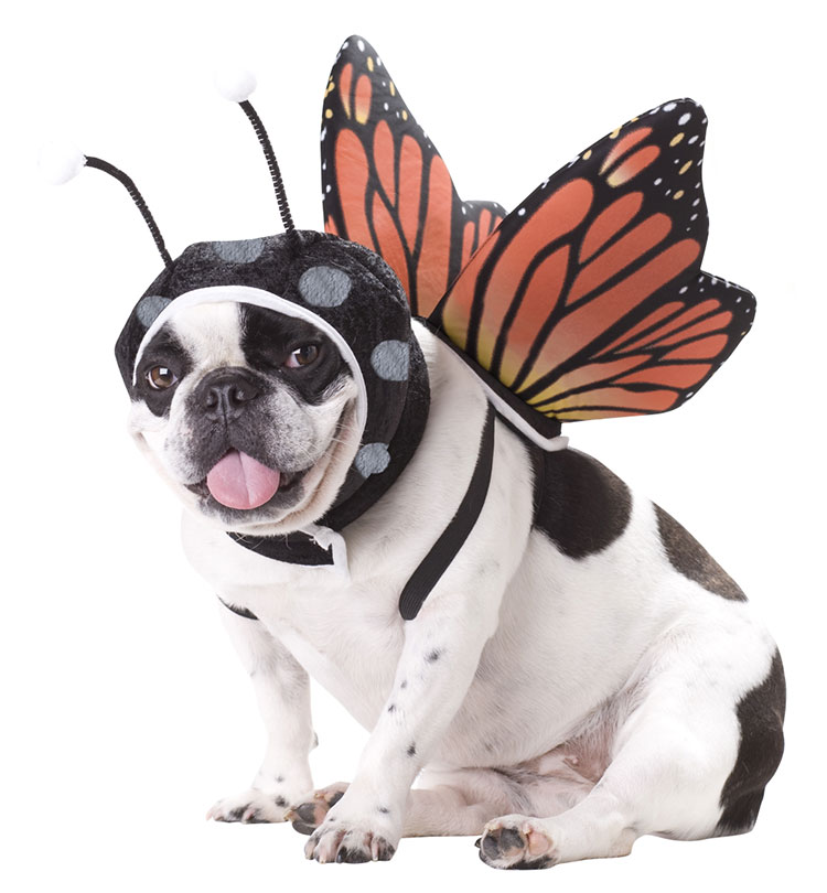 PET20101-Butterfly-Dog-Costume-large